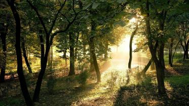 light_landscapes_nature_wood_1920x1080_26870